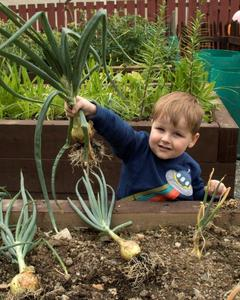 boy with freshly pulled onion